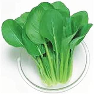 Asian Mustard Spinach Seeds - Green Boy Seeds - Komatsuna - 300 Seeds