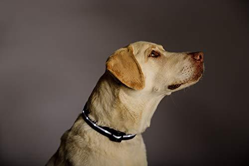 Product Image 4: Blazin' Safety LED Dog Collar