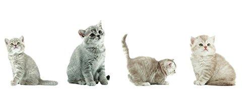 8 x raamsticker katten, katten, katten, kattenkinderen, raamafbeeldingen, raamdecoratie, raamdecoratie, raamdecoratie, raamfolie, raamfolie, tegelstickers, tegelstickers, 4 verschillende ontwerpen, meerdere malen herbruikbaar