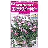 サカタのタネ 花の種 コンテナスイートピー キューピッドミックス 2ml
