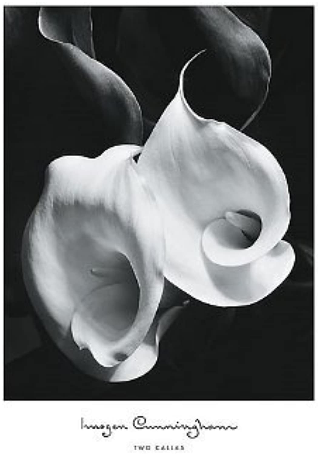 (16x20) Imogen Cunningham Two Callas Art Print Poster by Poster Revolution