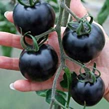 HOT - Rare Ukrainian Organic Heirloom Vegetable Tomato Seeds