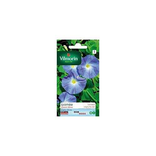 Vilmorin - Sachet graines Ipomée Géante bleue