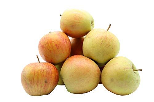 Bleichhof Äpfel Rubinette - saftig, fein-säuerliches Cox Orange Aroma, aus der Pfalz (5kg) Neue Ernte 2020