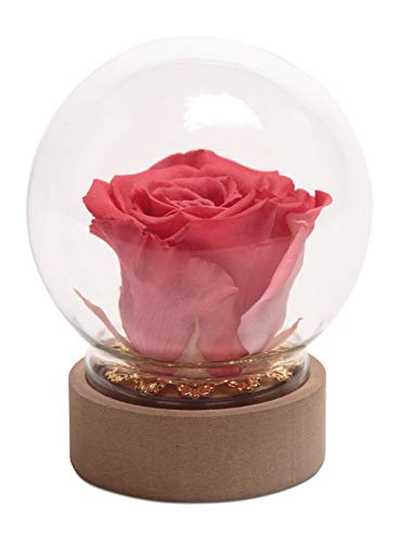 Rose im Glas Korall-Rot Rund die Schöne und das Biest echte konservierte Rose in Glasgkuppel (Medium, Korall)