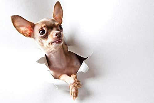 5D Diamant Schilderij Volledige Diamant Gescheurd Papier Hond Ronde Diamant Cross Stitch Kit DIY Diamant Borduurwerk Kunst Gift Home Decoratie 15,7 × 19,7 Inch
