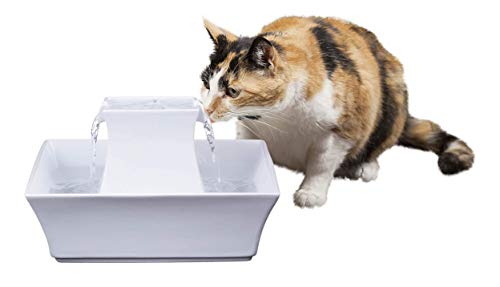 Best Cat Fountain for Cats That Tip Over Water Bowl