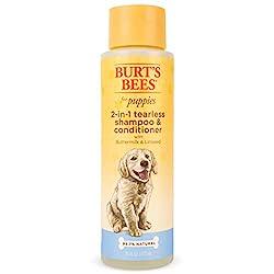 Bestes Shampoo für Golden Retriever und ihre glänzenden Mäntel
