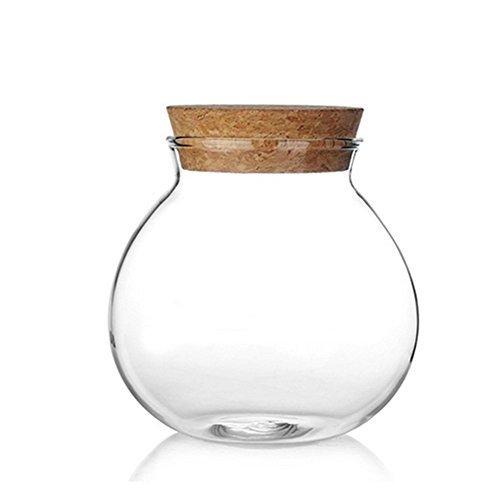 Milopon Airtight Canister Jerrican hermétique en verre transparent avec bois pour bonbons, thé, biscuits, céréales, 570 ml