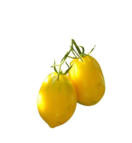Zitronen Tomate -Plum Lemon- 10 Samen -Sehr Robust- *AUS RUSSLAND*