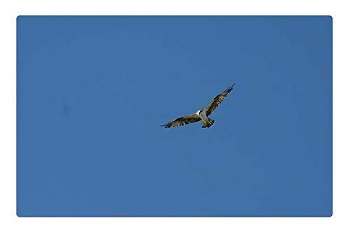 LESGAULEST Doormat Floor Rug/Mat (23.6 x 15.7 inch) - Hawk Bird of Prey Blue Sky Prey Bird Wildlife