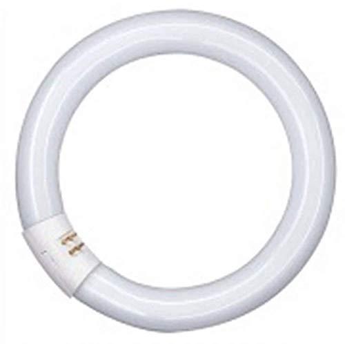 Osram Lumilux T9 C Leuchtstoffröhre, G10Q-Sockel, 40 Watt, Kaltweiß - 4000K