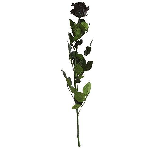 Verdissimo-Rosa amorosa, 50 cm, color negro
