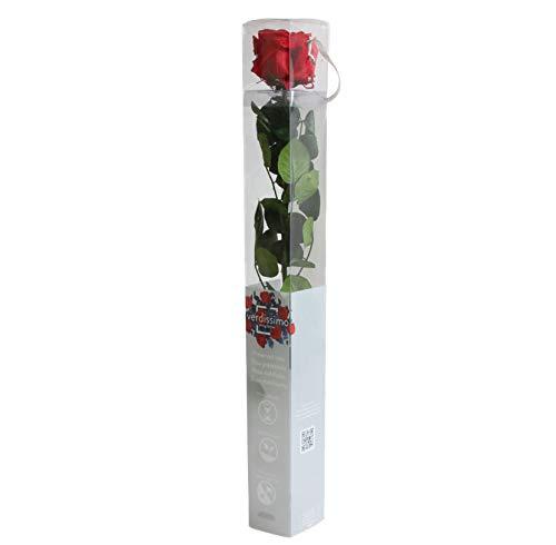 Rosa eterna – Rosa natural preservada – Color Rojo – Regalos para parejas – Ideas para San Valentín o un aniversario – Regalos románticos