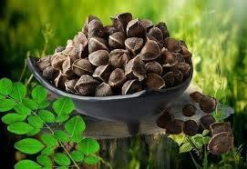 Qulista Samenhaus - Ägypten Bio Moringa Samen 20/50 Stück Gemüse Bio Saatgut mehrjährig winterhart