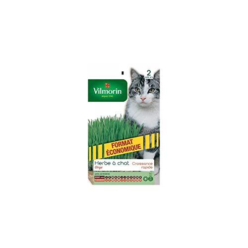 Vilmorin - Sachet graines Herbe à Chat