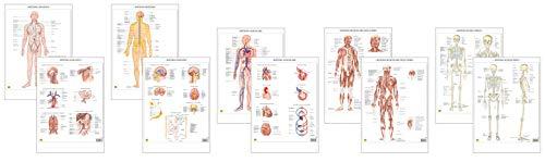 Sistemi del corpo umano [Serie di 5 Poster Scientifici 29,7x42 cm] [1x: Sistema Linfatico, Sistema Muscolare, Sistema Nervoso, Sistema Scheletrico, Sistema Vascolare] Belletti
