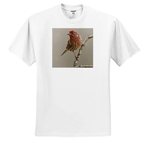 3dRose Danita Delimont - Birds - Male House Finch in Winter. - Toddler T-Shirt (4T) (ts_345307_17) White