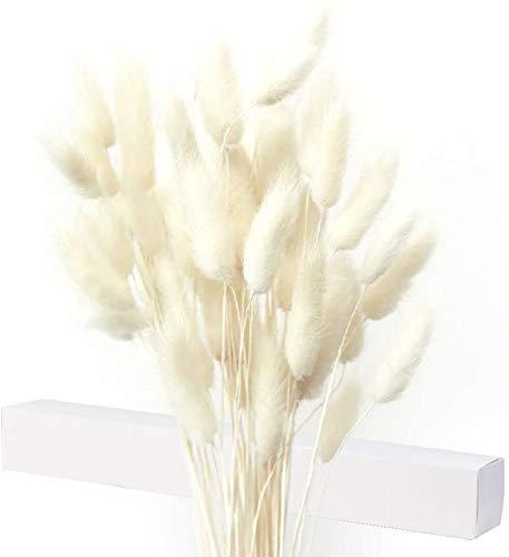 Getrocknete Pampasgras Deko, 40X Pampasgras Getrocknet, Kein Geruch Trockenblumen, Trockenblumenstrauß, Natürliche Blumendekoration, Kartonverpackungen sind Nicht leicht zu zerbrechen (Weiß)