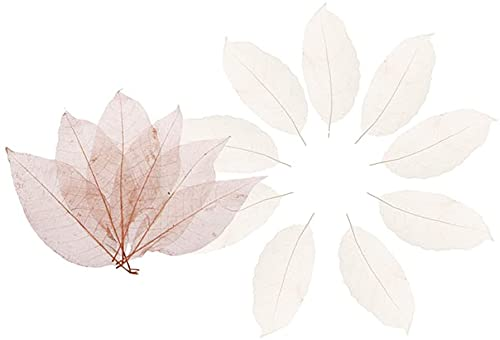 100x Mixed Natural maolia Skeleton Leaves Cards Scrapbooking DIY Nice Design