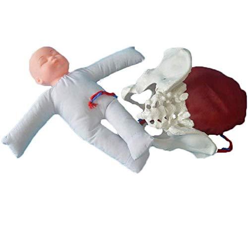 Weiblich Beckengeburtsmodell Geburtssimulator Geburtsdemonstrationsset für die Studienanzeige Medizin lehren Modell