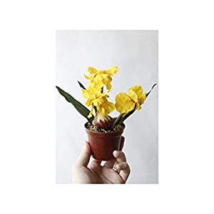 Misscany 3 Colours 1Set Mini Artificial Flower Fake Iris Potting Silk Flowers Bonsai for Wedding Home Party Decorative,Yellow