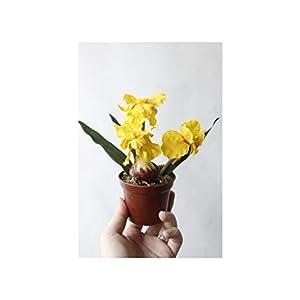 Silk Flower Arrangements Misscany 3 Colours 1Set Mini Artificial Flower Fake Iris Potting Silk Flowers Bonsai for Wedding Home Party Decorative,Yellow