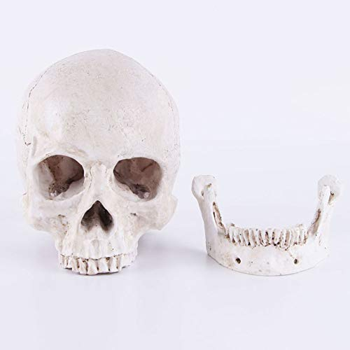 VOANZO Figura de esqueleto humano realista con cabeza de cráneo para decoración de mesa de Halloween
