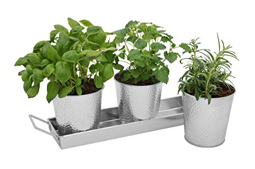 Saratoga Home Herb Pots with Tray Set - Indoor Windowsill Galvanized Planters with Drainage Holes for Healthy Plants