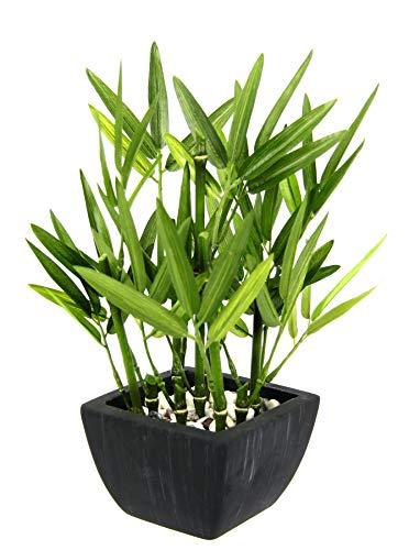 Künstlicher Bambus in Schale mit Deko-Steinchen Bambusgras Lemongras Kunstpflanze Pflanze Grünpflanze Kunstbaum Baum Zimmerpflanze Bambuspflanze Bambusbaum Strauch Lemongras Asiatische Gräser Sträuche