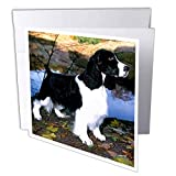 3dRose Dogs English Springer Spaniel - Black and White Springer Spaniel - 1 Greeting Card with Envelope (gc_949_5)