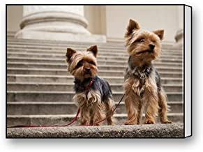 "Flipped Summer Dog Yorkie Yorkshire Terrier Custom Canvas Prints for Living Room Bedroom Home Office Decor 12"" x 16"""