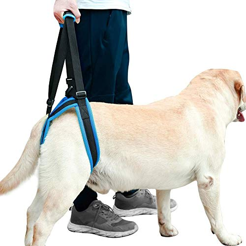 Dog Lift Harness - Dog Lift Support Harness for Weak Rear Legs, Veterinarian Approved Dog Handicap Harness Help for Small Medium Large Dogs, Adjustable Straps for Old, Disabled, Joint Injuries