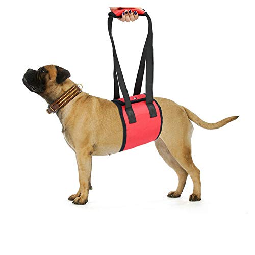 Pet Supply Dog Walking Lift Harness Sling,Helps Dogs with Weak Front Or Rear Legs Stand Up, Walk, Get into Cars, Climb Stairs. Best Alternative to Dog Wheelchair,Red,M