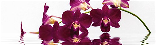Artland Qualität I Glas Küchenrückwand ESG Spritzschutz Küche 180 x 51.4 cm Botanik Blumen Orchidee Foto Lila F1TA Phalaenopsis Orchidee vor freistehendem Hintergrund und großartiger Reflexion