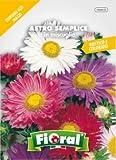 Sementi da fiore di qualità in bustina per uso amatoriale (ASTRO SEMPLICE IN MISCUGLIO)