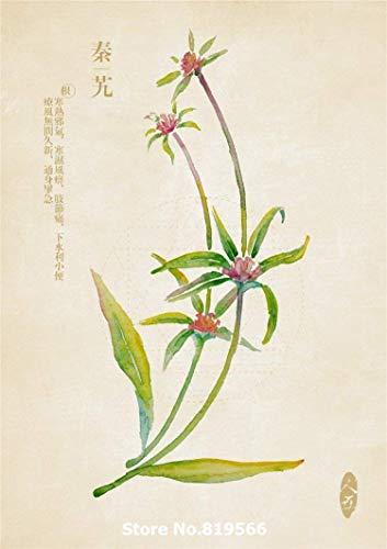 VISTARIC Real chinesisch Gentiana macrophylla Pall Samen qinjiao Indoor-Bonsai im Freien Garten-Kräuter Pflanzen countryard Sementes