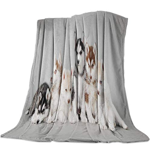 Kpdar Flannel Blanket 3D Printed blankets Soft Warm Flannel Fleece Throw Blanket for Bed Couch Camping and Travel—Siberian Husky Group Of Cute Pet Dogs 180x240 cm