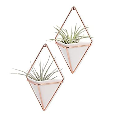 LANMU Hanging Vase, Air Plants Pots,Hanging Wall Decor,Plant Holder,Hanging Plant for Air Plants/Succulents/Cactus Plants/Office Plants/Artificial Plant