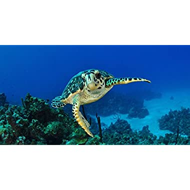 Amazing Scuba Diving Experience in the Cayman Islands for One - Tinggly Voucher / Gift Card in a Gift Box