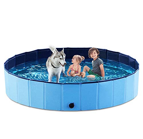 Big Dog Pool