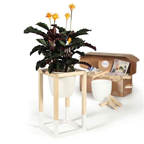 CREATE! by OBI DIY Pflanzständer, klein   Dekorativer Pflanzenständer aus Holz zum Selberbauen (Hinweis: Farbe im Set Nicht enthalten)