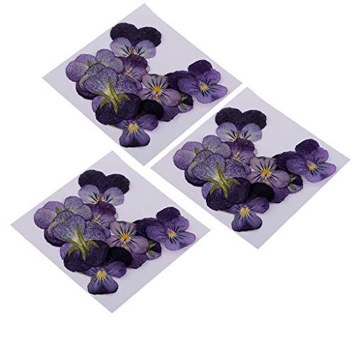 TZZD 36 Stück Natürliche gepresste echte Blume Violette Blume Getrocknete Blumen for Anhänger mit Schmucksachen, das Kunsthandwerk