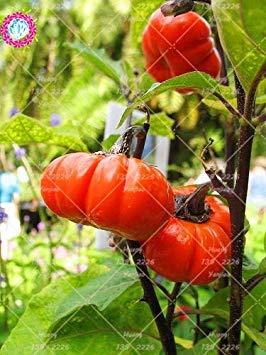 Vista 10 pcs Mini Graines De Citrouille Graines De Courge-Courgette Bonsaï Bio Fruits Légumes Graines Plante En Pot Pour La Maison Jardin