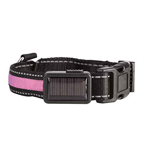 TAKE FANS Collar de perro Solar USB recargable LED luz intermitente noche seguridad mascotas Nylon collares (rosa, M) durable