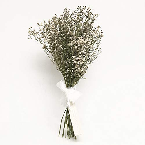 PANICULATA, la flor más bonita del mundo. Ramo de paniculata seco natural