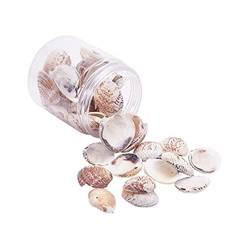 TNSYGSB Natürliche Muscheln mit einem Loch für DIY. Windspiele Ornament Vase Füller Hochzeit Tischdekoration Ornamente Muschel Strand