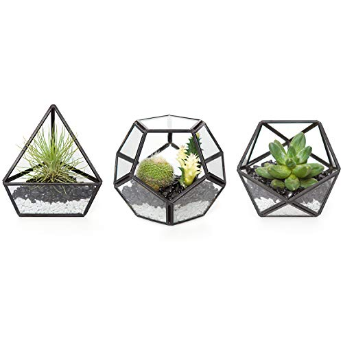 Mkono 4'' Mini Glass Geometric Terrarium Container Set of 3 Modern Tabletop Planter Shelves Decor Display Box Centerpiece Gift for Succulent Air Plant Miniature Fairy Garden, Black(Plant Not Included)