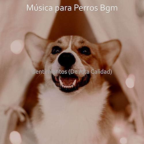 Música para Perros Bgm