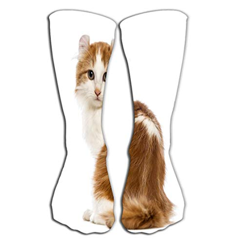 "Socks 19.7""(50cm) for Women & Men - Best for Running, Athletic Sports, Crossfit, Flight Travel rear view american curl kitten months old sitting looking camera front white background"